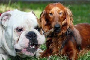 """How To Make Peace In """"Blended Families"""" Where Dogs Don't Get Along"""