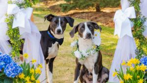 Married with Children. Can These Rescue Pups Stay Together Forever?