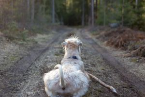 7 Ways To Make Sure You Never Lose Your Dog Again