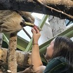 Buttonwood Park Zoo: Animal Welfare from a Veterinary Science Perspective