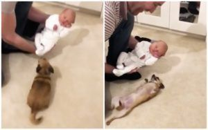 Tiny Dog Has A Surprising Reaction To Meeting Newborn Baby Brother