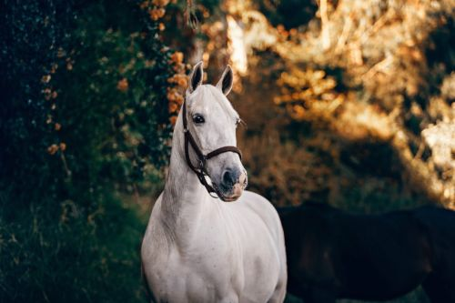 Equine Glucosamine Supplements
