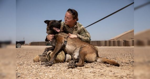 Military Dogs Get First Ever Blood Bank To Save Their Lives In Combat