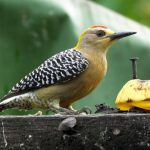 Urban Birding in Costa Rica