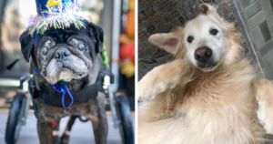 AdoptedASeniorDog Contest Shows How Great Adopting An Old Dog Can Be