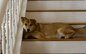 4 Reasons Dogs Are Afraid Of Stairs And How To Help Them With Their Fear