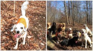 Senior Rescue Dog Dies Defending His Humans & Dog Friends From A Black Bear