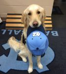 Therapy Dogs Go to College to Help Students