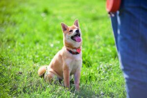Dog Park Etiquette 101: Is Your Pet Prepared?