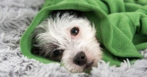 How To Tell If Your Dog Has A Cold Or Something More Serious
