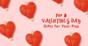 Top 8 Valentine's Day Toys For The Dog That Stole Your Heart!