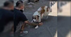 Beautiful Video Shows Dog Reunited With His Person Following Beirut Explosion