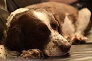 Your Dog's Sleeping Habits Can Reveal Secrets About Their Health & Personality