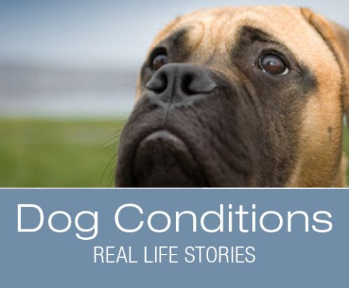 What Would You Do if It Was Your Dog: Rufus' Collapse