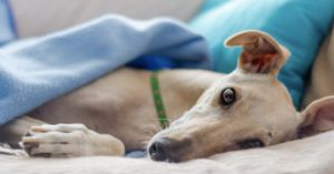 Arkansas Greyhound Track Is Closing, But The Dogs Will Find Good Homes