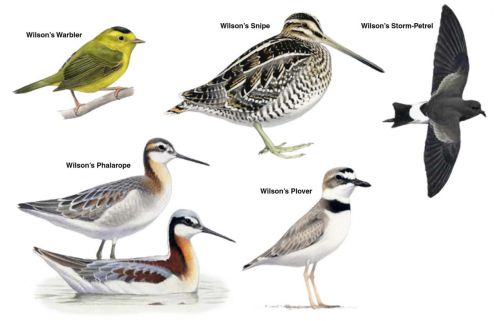 The People Behind The Birds Named For People: Alexander Wilson