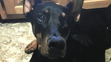 Ohio Cop Saves Dog With Overdose Reversal Drug Narcan