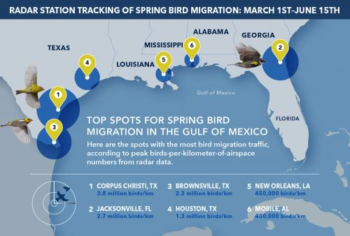 Gulf Coast Birders: Get Ready for 2 Billion Birds