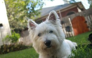 5 Ideas For Creating The Perfect Dog-Friendly Backyard