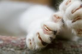 What Declawing Really Is