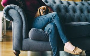 10 Dog Breeds That Bark The Least