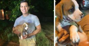Firefighters Rescue Puppy From Texas Storm Drain