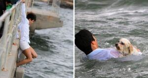 Man Goes To Pier To Spread Grandmother's Ashes & Ends Up Saving Drowning Dog