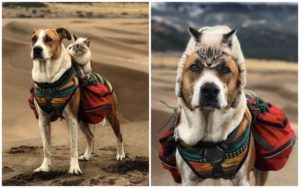Adventurous Dog & Cat Love Exploring The Outdoors Together