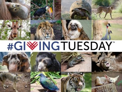 Make Giving Tuesday a Giving ZOOday!