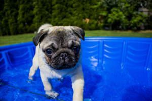 10 Great Ways To Keep Your Dog Cool This Summer