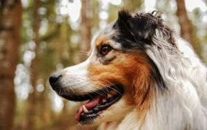 Astaxanthin For Dogs: The Powerhouse Super-Nutrient Everyone's Talking About