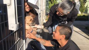 1,000 L.A. Shelter Pets Receive A Special Holiday Surprise