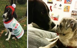 Terminally Ill Pup Brings Youthful Spark To Senior Dog Retirement Home