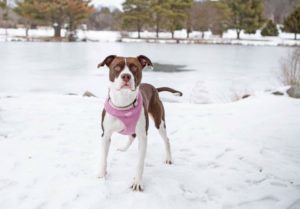 Formerly Abandoned Dog Is Desperately Searching For A Special Forever Home
