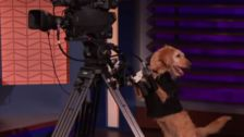 Conan O'Brien Replaces Bearded Guys On His Show With Dogs, Instantly Improves Set