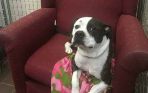 Comfy Chairs Give Shelter Dogs A Taste Of Home While They Await Adoption