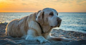 4 Unforgettable Ways To Honor The Life of a Dog Who Passed Away