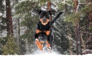 10 Simple Tricks To Tire Out Your Active Dog