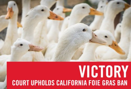 Ninth Circuit Court of Appeals Upholds State's Right to Protect Ducks from Cruelty of Foie Gras