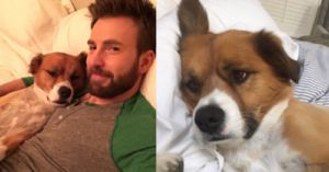 Chris Evans Joined Instagram Just To Share Pictures Of His Dog