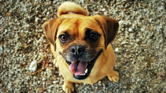 5 Amusing Reasons Why Pets Make the Best Children