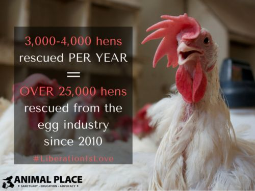 Since being rescued, each one of these hens received the