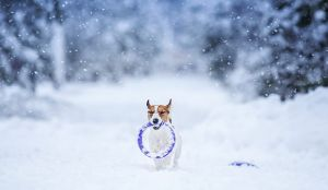 A Dog In Winter: Myths And Facts