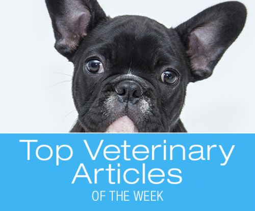 Top Veterinary Articles of the Week: Coat Color and Health, Diabetes, and more