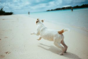 5 Tips For A Successful Beach Day With Your Dog