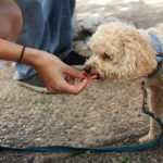 Does an Apple a Day Keep the Vet Away? Harmful vs Healthy Foods for Pets