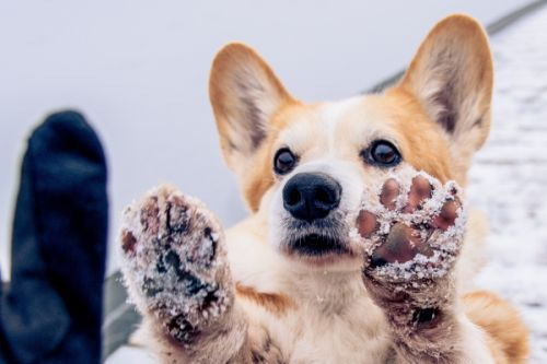 5 Tips to Keep Your Pet Safe During The Last of Winter