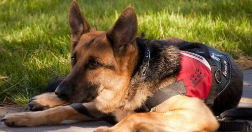 Service Dogs Denied Entry To Utah Restaurant For The Craziest Reason