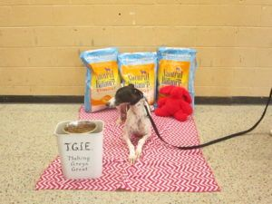 You Helped Save Over 600 Greyhounds With Rescue Bank