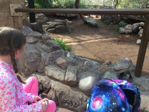 The Story of Ruby and Our Burrowing Owls
